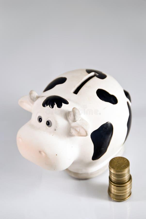 корова наличных дег банка piggy стоковые фотографии rf