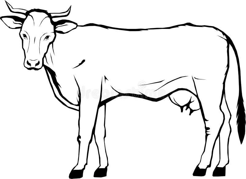 Корова, ферма, векторная графика, логотип, изолированная иллюстрация искусства, вензель иллюстрация штока
