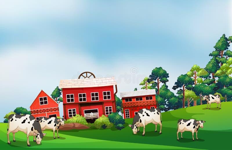 Коровы в ферме иллюстрация штока