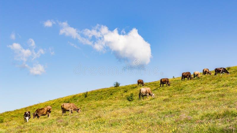 Рай коров стоковая фотография rf