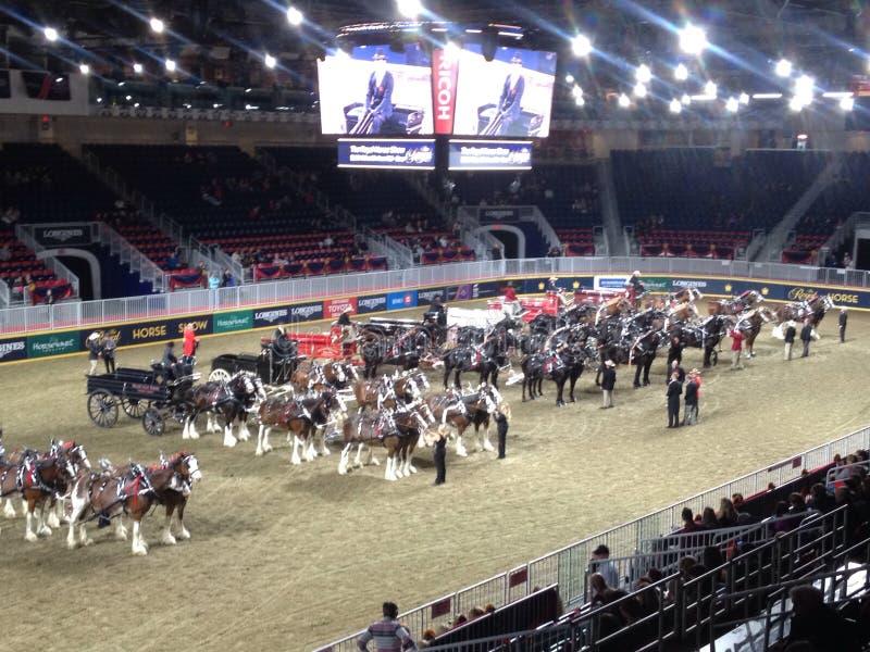 Королевская выставка лошади в Торонто стоковое изображение rf