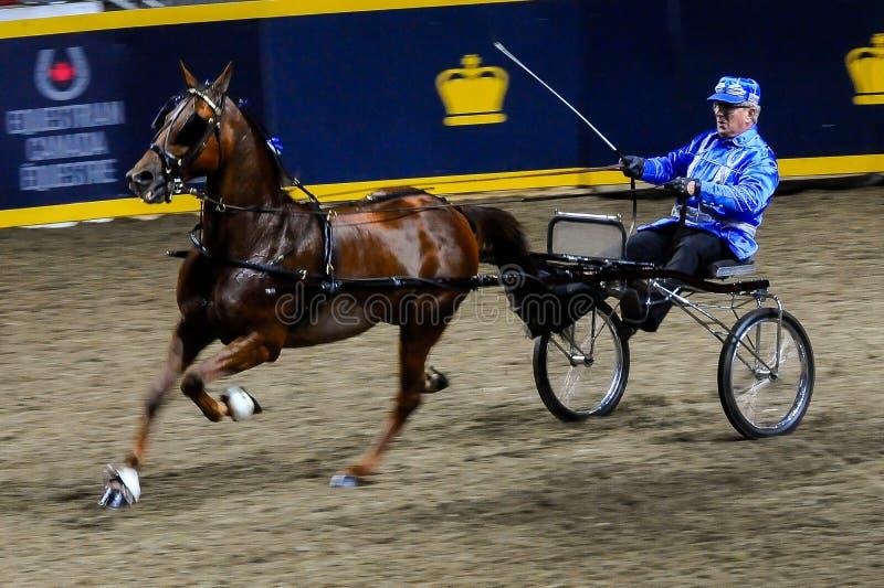 Королевская выставка лошади в Торонто стоковая фотография