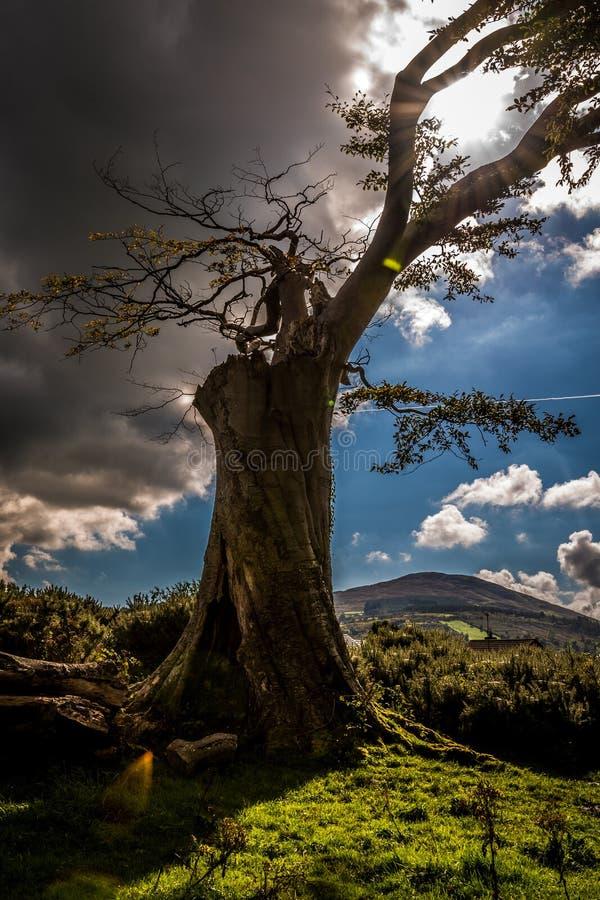 Король земли стоковое фото rf