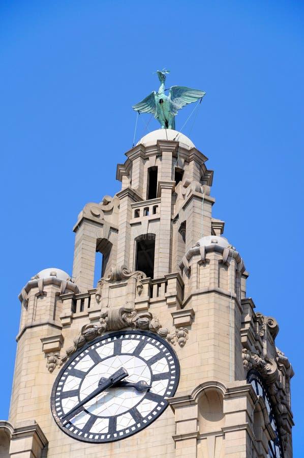 Королевская башня с часами здания печени, Ливерпуль стоковые фотографии rf