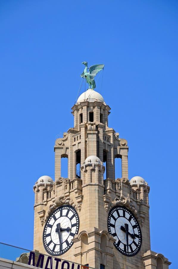 Королевская башня с часами здания печени, Ливерпуль стоковая фотография rf