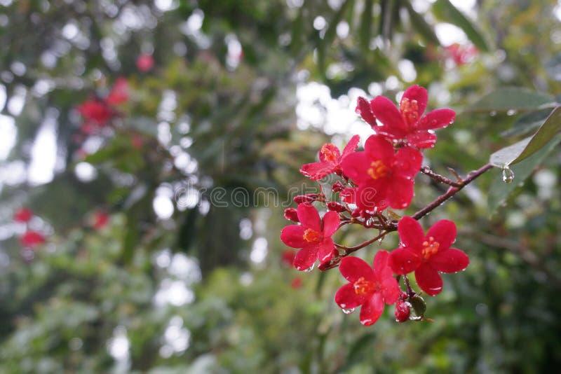 Королевские ботанические сады, Peradeniya, Шри-Ланка стоковое фото rf