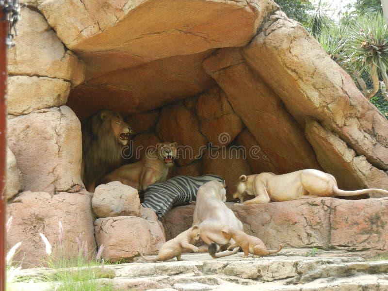 Король Показ льва стоковая фотография