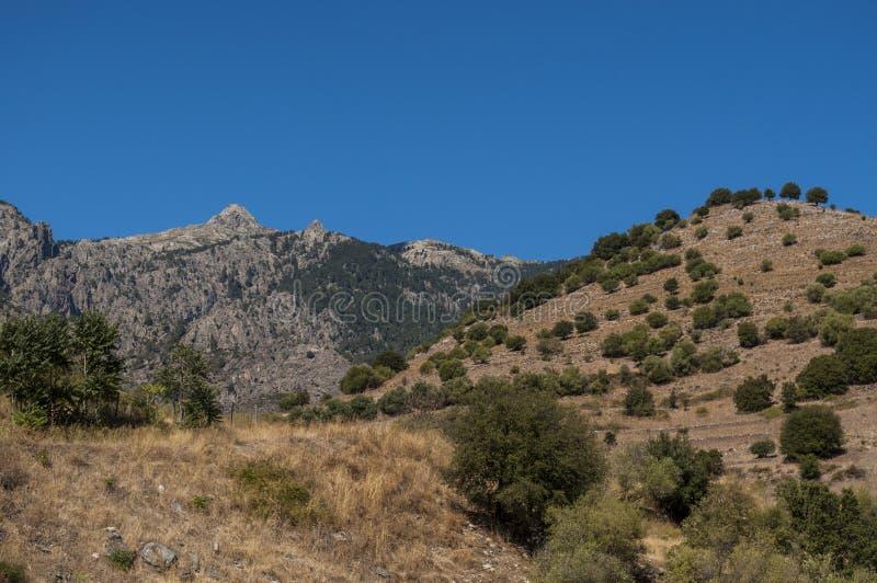 Корсика, одичалый ландшафт, Haute Corse, верхнее Corse, Франция, Европа, Haut Asco, долина Asco, высокий центр Корсики, острова стоковое фото rf