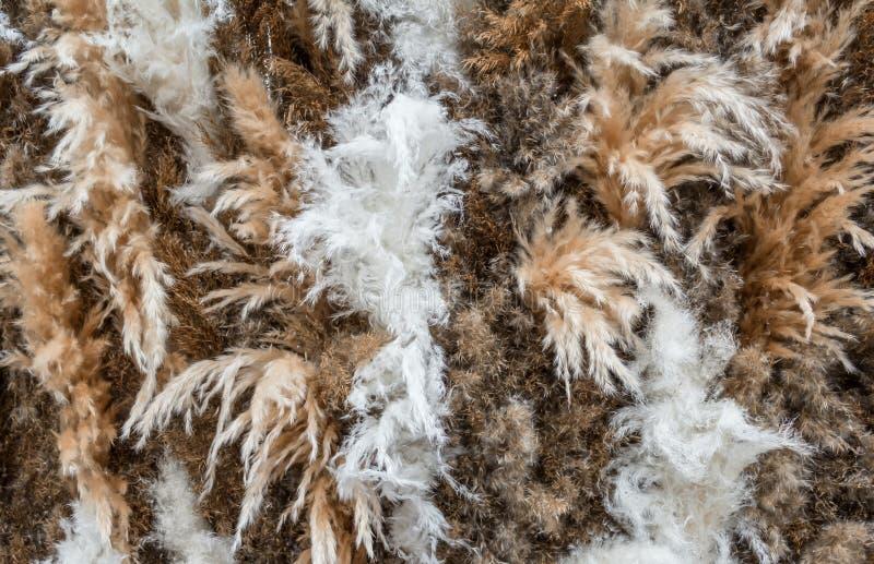Кортадерия Селлоана или пампас трава фон Закрыть представление стоковая фотография rf