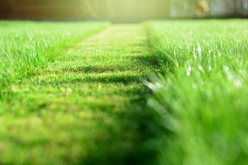 косить лужайки Перспектива прокладки отрезка зеленой травы Selecti стоковое фото rf