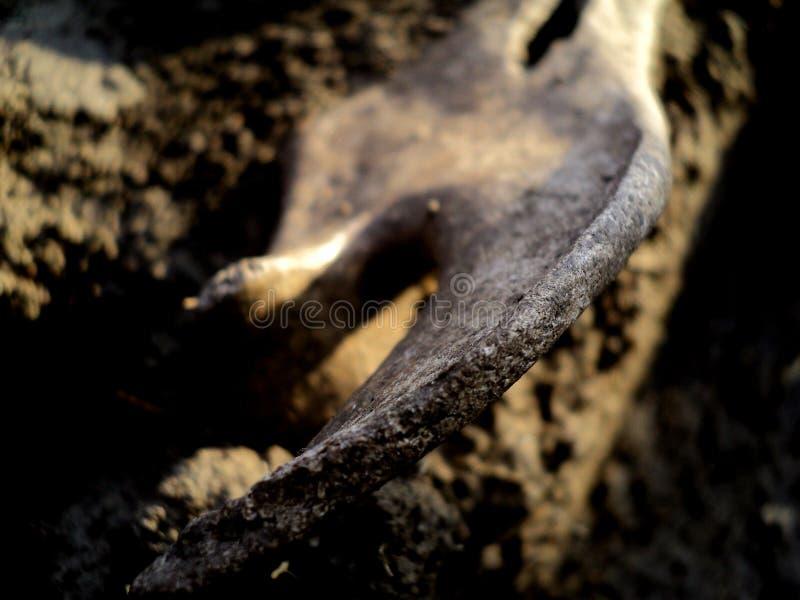 Косточка археологии стоковое фото
