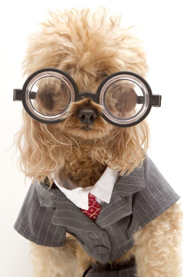костюм собаки дела стоковое изображение