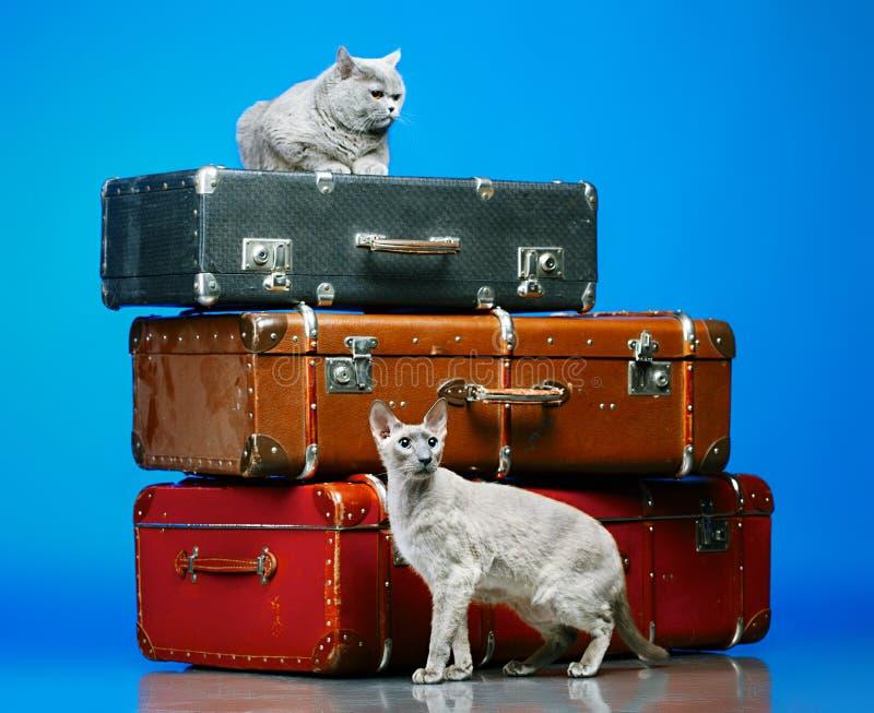 2 кота стоковые фото