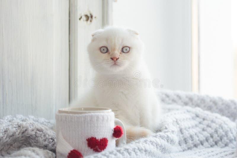 Котенок белизны темы валентинки стоковая фотография