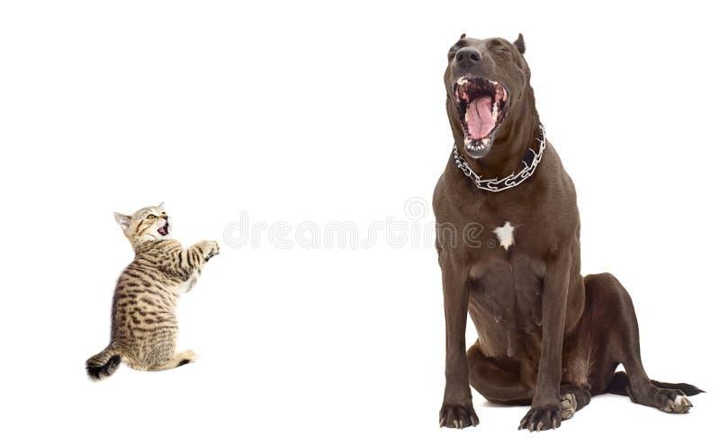 Котенок был вспугнутой большой собакой стоковое изображение rf
