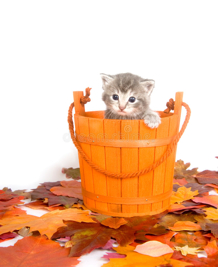 находит котенок в ведре картинка итоге