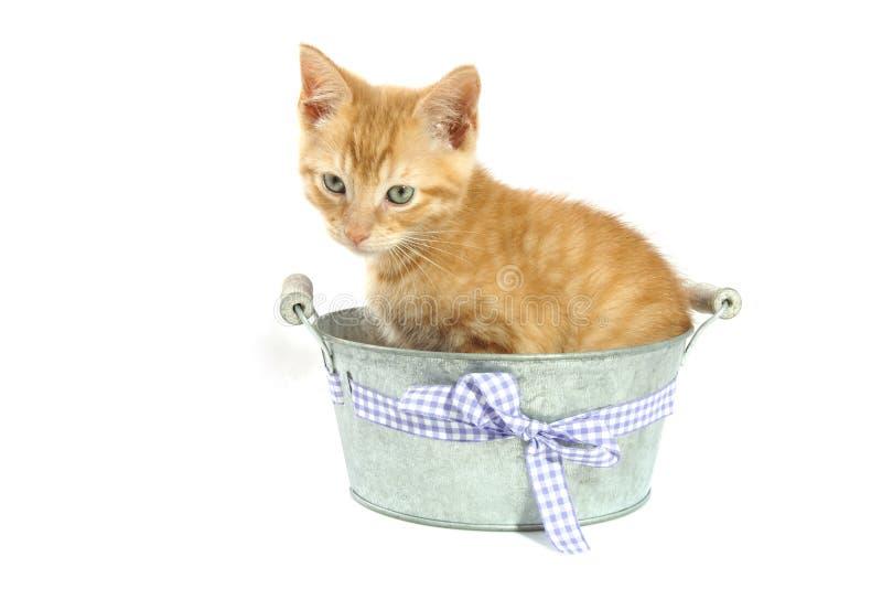 Котенок в ведре стоковое изображение rf
