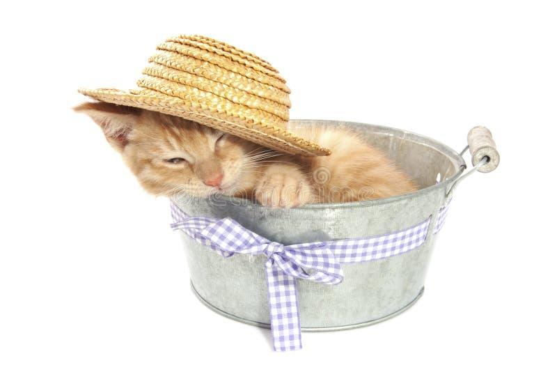 Котенок в ведре стоковая фотография