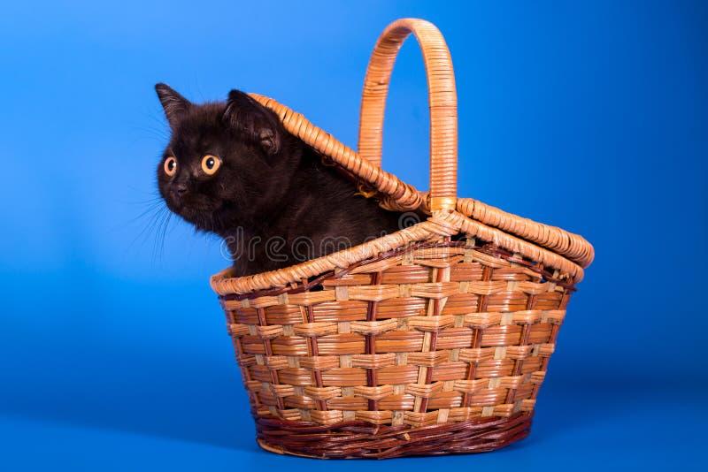 котенок в корзине стоковая фотография rf