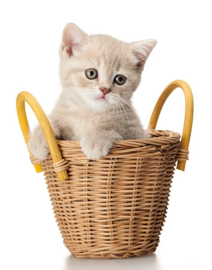 Котенок в корзине стоковые изображения rf