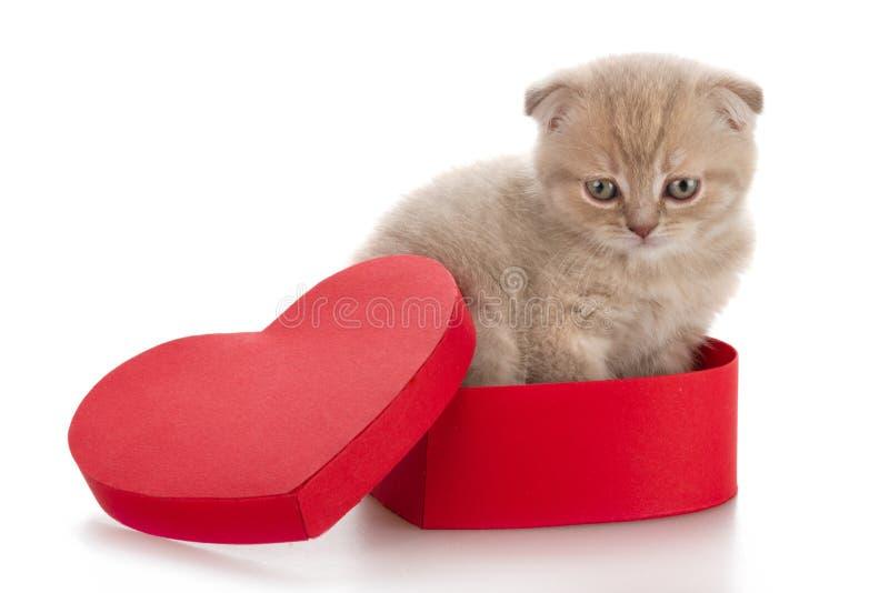 Котенок в присутствующей коробке стоковое изображение rf