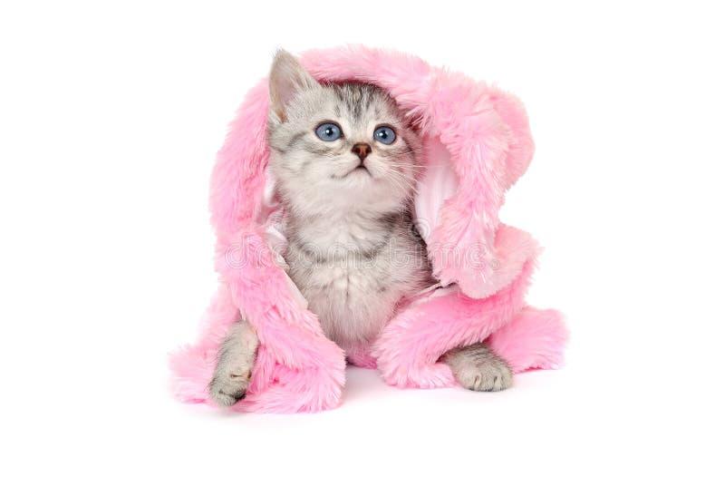 Котенок в розовой меховой шыбе на белой предпосылке стоковая фотография