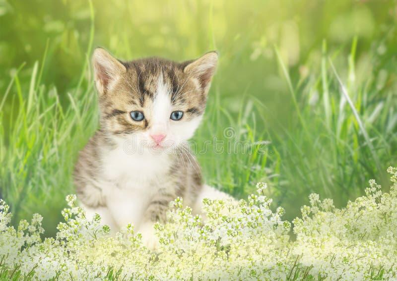 Котенок в саде с цветками на предпосылке стоковое фото rf