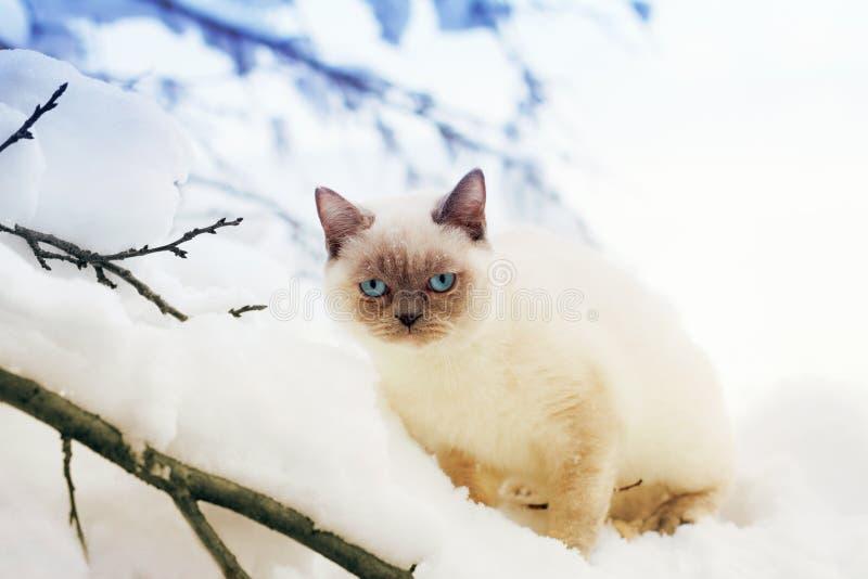 Download Котенок в снеге стоковое фото. изображение насчитывающей парк - 41653290