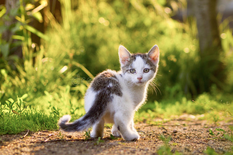 Котенок в траве стоковое фото