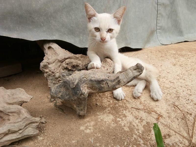 Котенок лежа на журнале стоковая фотография rf