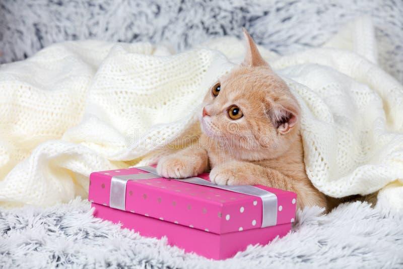 Котенок лежа на присутствующей коробке стоковые изображения rf