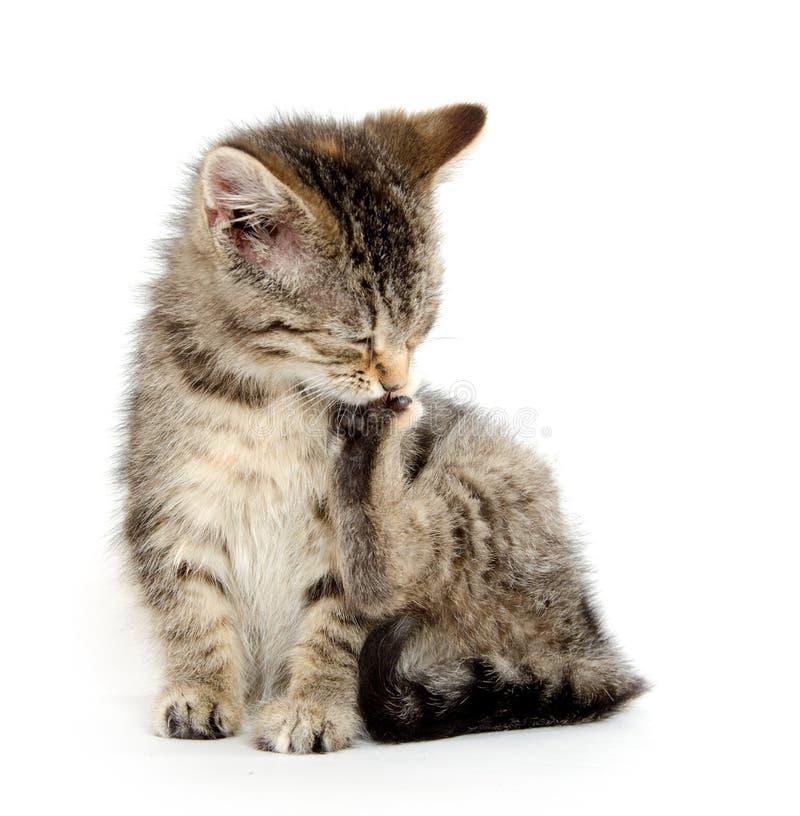 Котенок жуя свою лапку стоковое фото