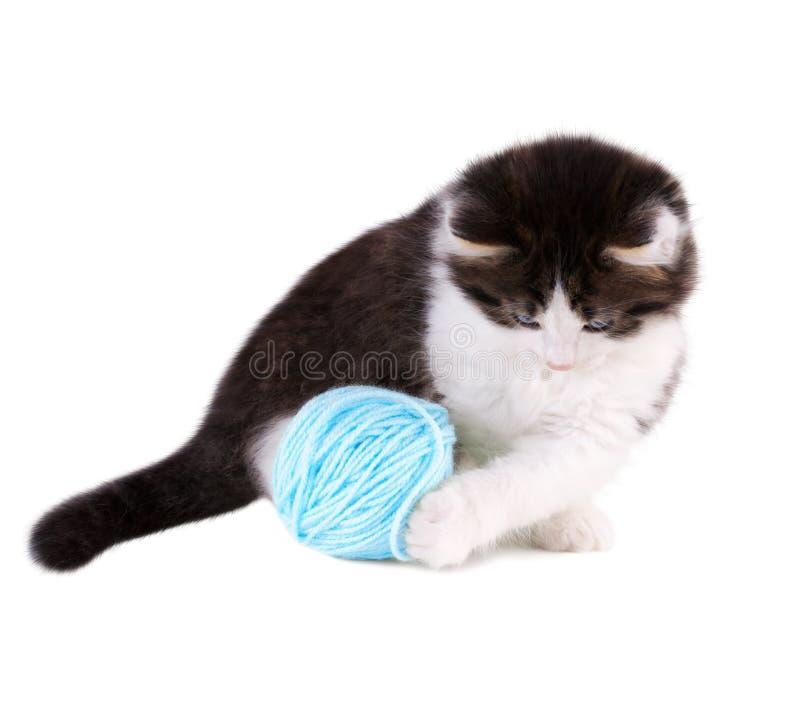 Котенок играя с голубым шариком стоковые изображения