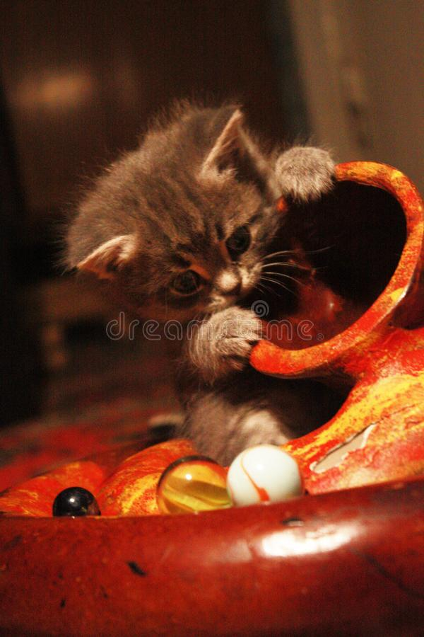 Котенок играя didgeridoo стоковые фото