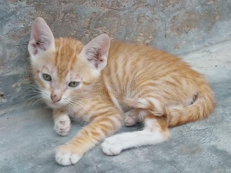 Котенок имбиря отдыхая outdoors стоковые изображения rf