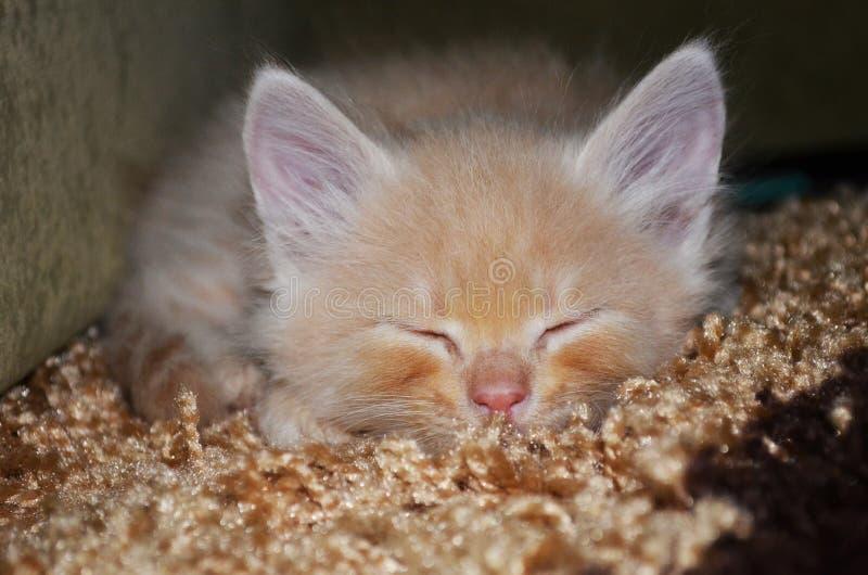 Котенок имбиря стоковая фотография rf