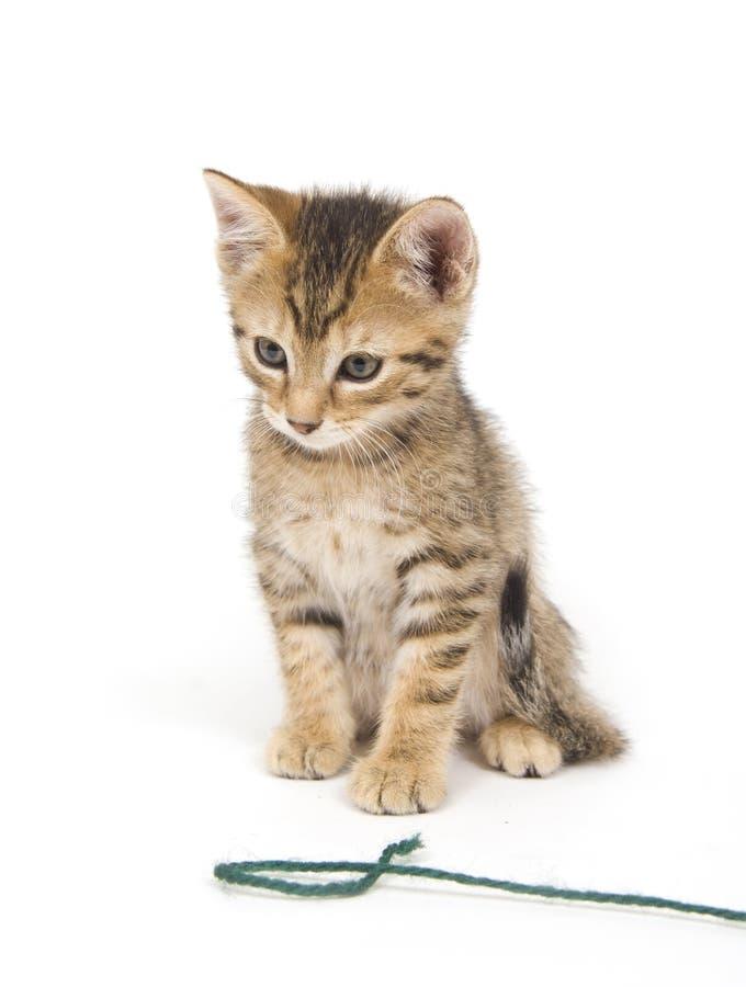 Котенок и пряжа Tabby стоковая фотография