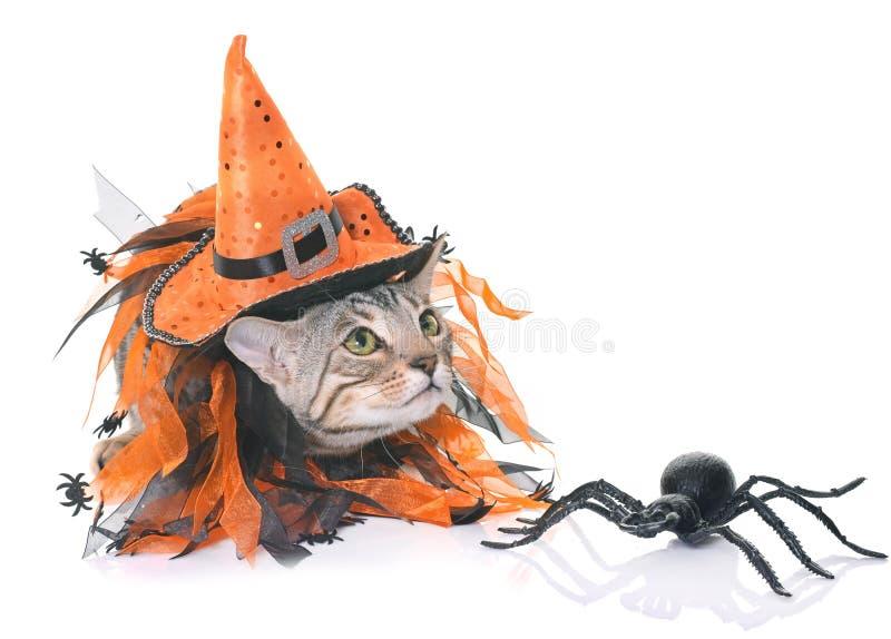 Котенок и хеллоуин Бенгалии стоковые изображения rf