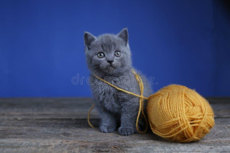 Котенок и шарик пряжи Пол, смотря вверх стоковое фото