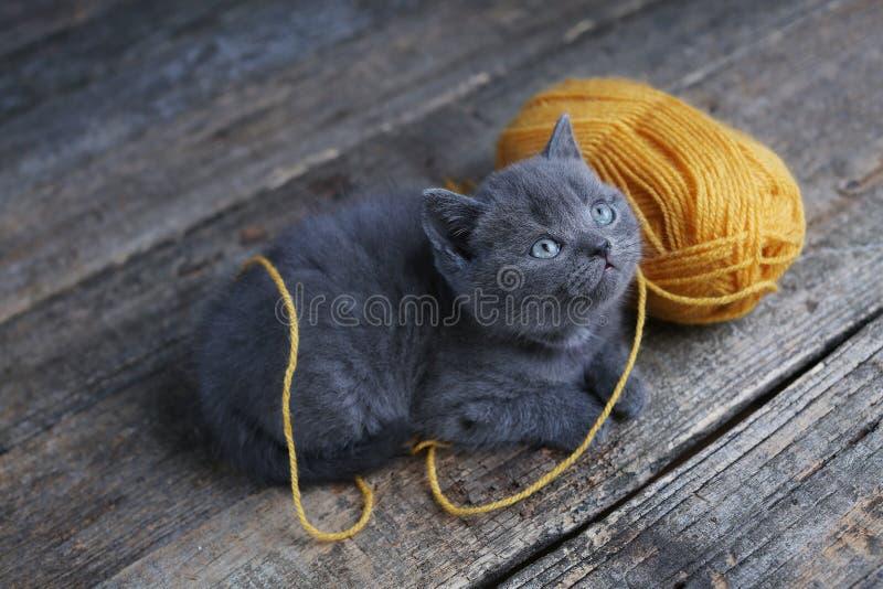 Котенок и шарик пряжи Пол, смотря вверх стоковое изображение