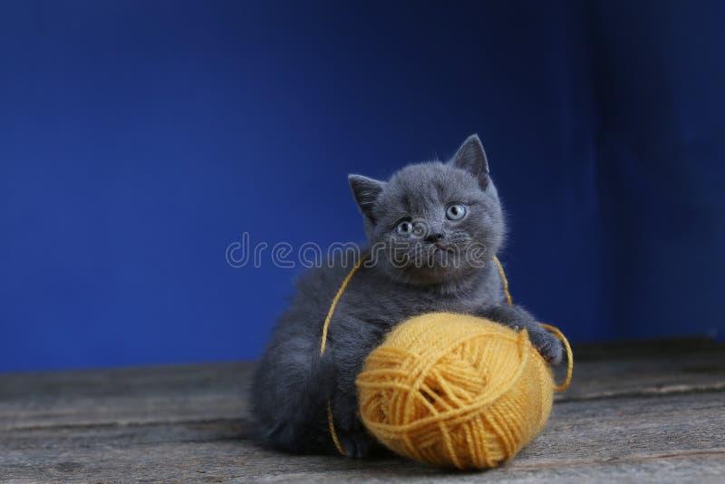 Котенок и шарик пряжи Пол, смотря вверх стоковые фотографии rf