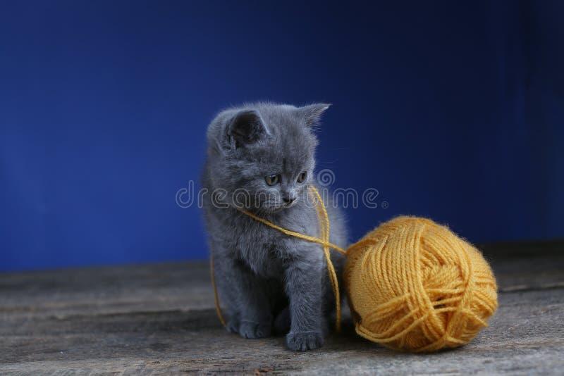 Котенок и шарик пряжи Пол, смотря вверх стоковая фотография rf