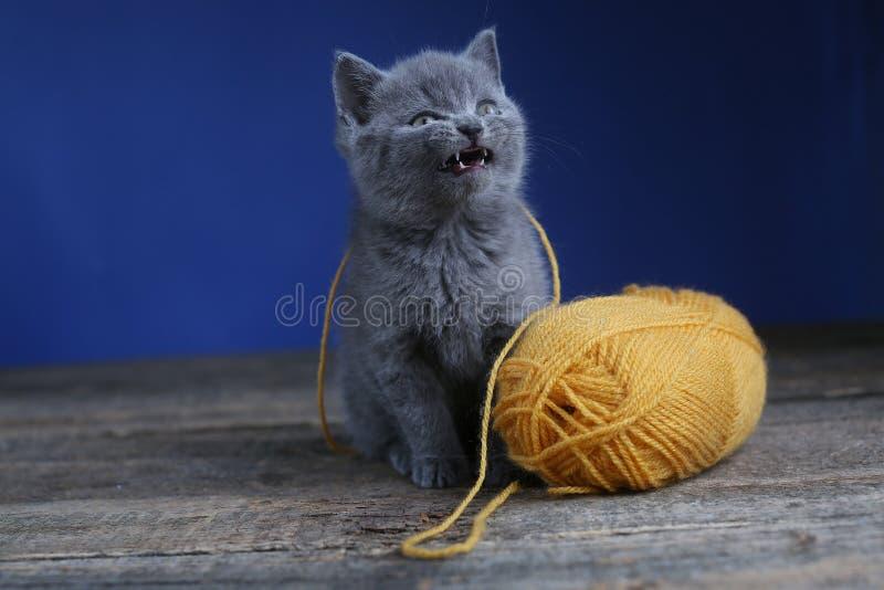 Котенок и шарик пряжи Пол, смотря вверх стоковое фото rf