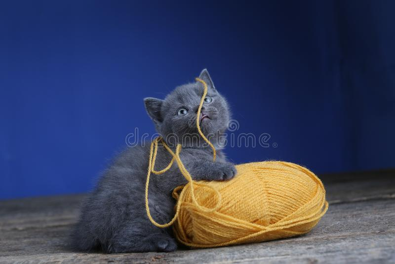 Котенок и шарик пряжи Пол, смотря вверх стоковые изображения rf