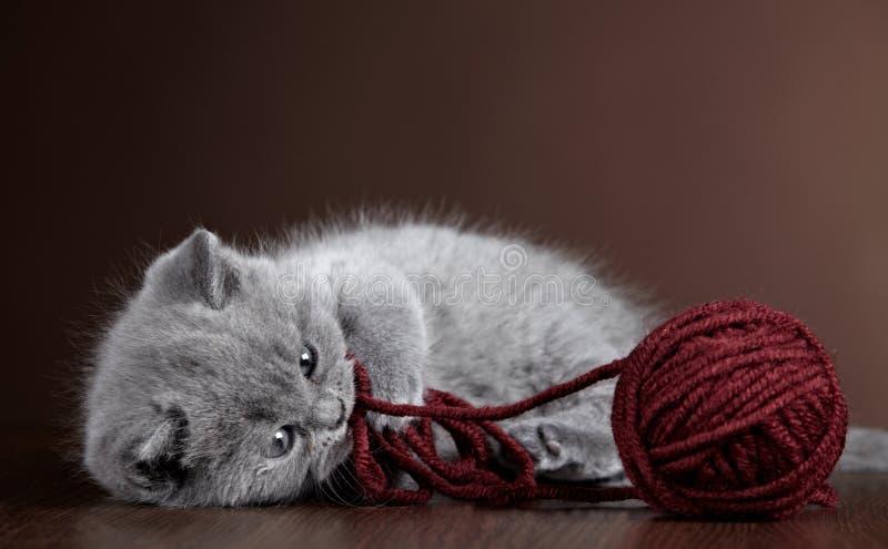 Котенок и шарик пряжи стоковое фото
