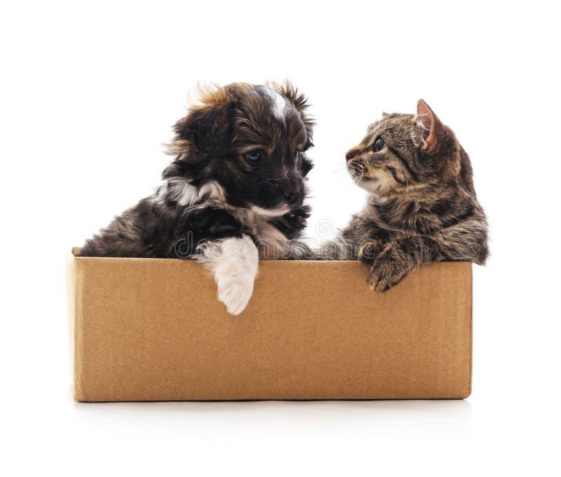 Котенок и щенок в коробке стоковые изображения