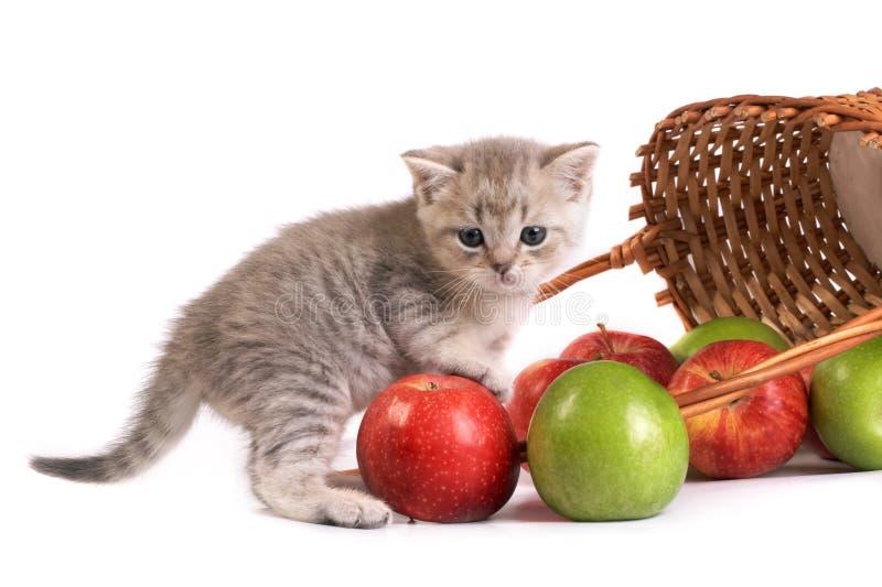 котенок корзины яблок стоковые фото