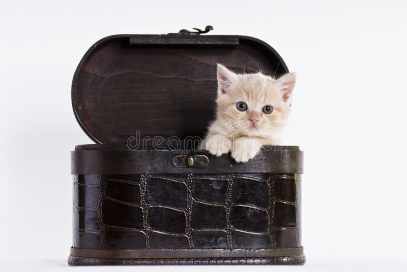 котенок коробки стоковая фотография rf