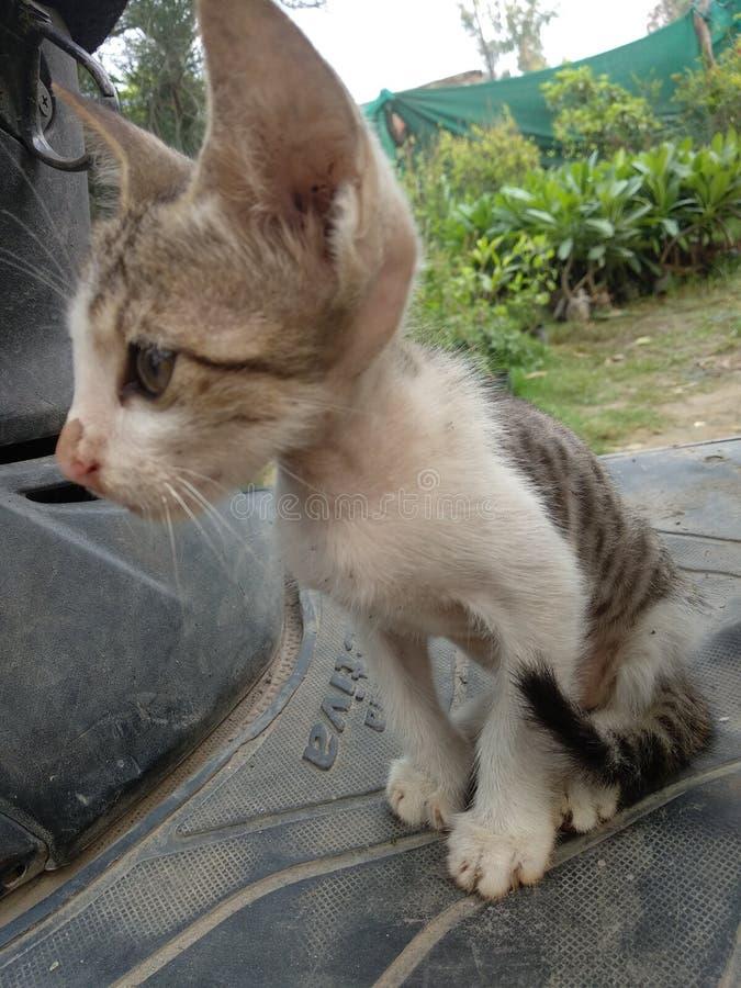 Котенок кота младенца милый мирный стоковое фото rf