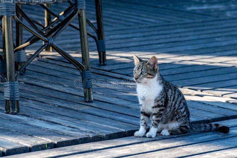 Котенок кота Tabby сидя на патио украшая летом стоковые фото